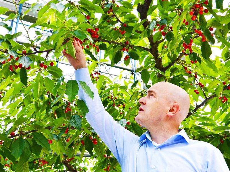 Fruit Picking Guide