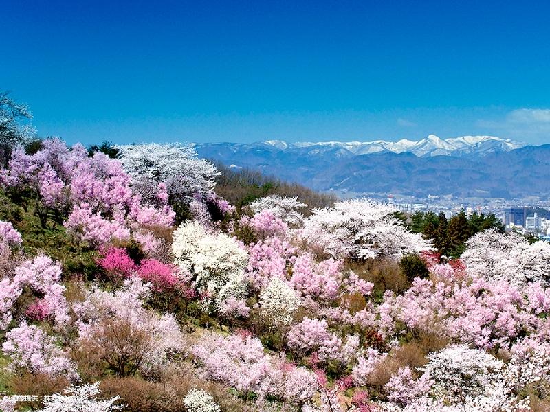 花見山 | 福島市観光ノート - 福島市の観光Webメディア