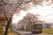 荒井の桜風景