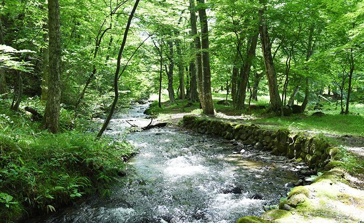 水林自然林