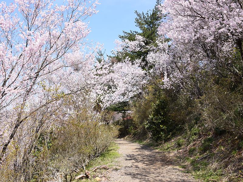 花見山公園内見学コース2