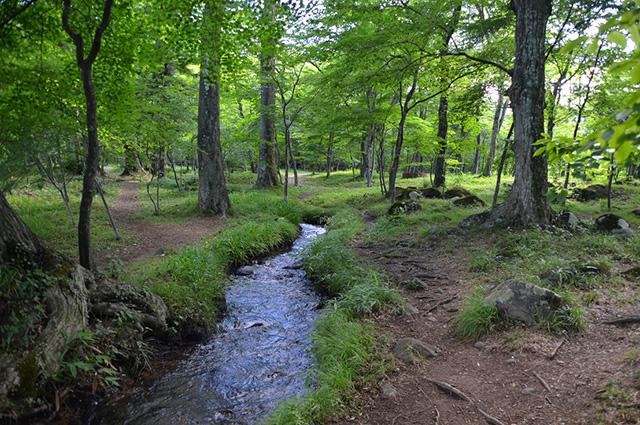水林自然公園