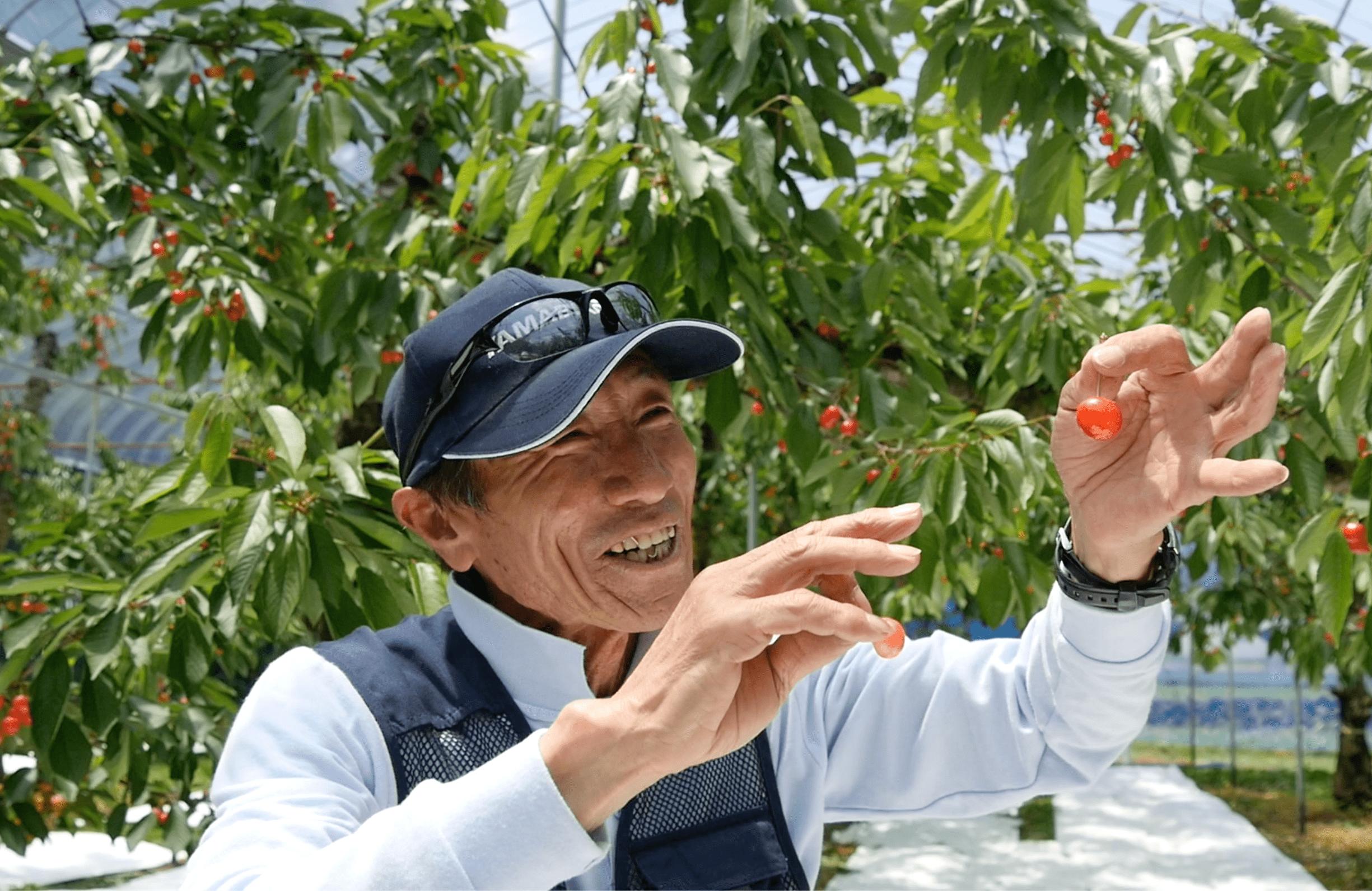 ベテラン果樹農家さん直伝!甘くて美味しいさくらんぼの見つけ方