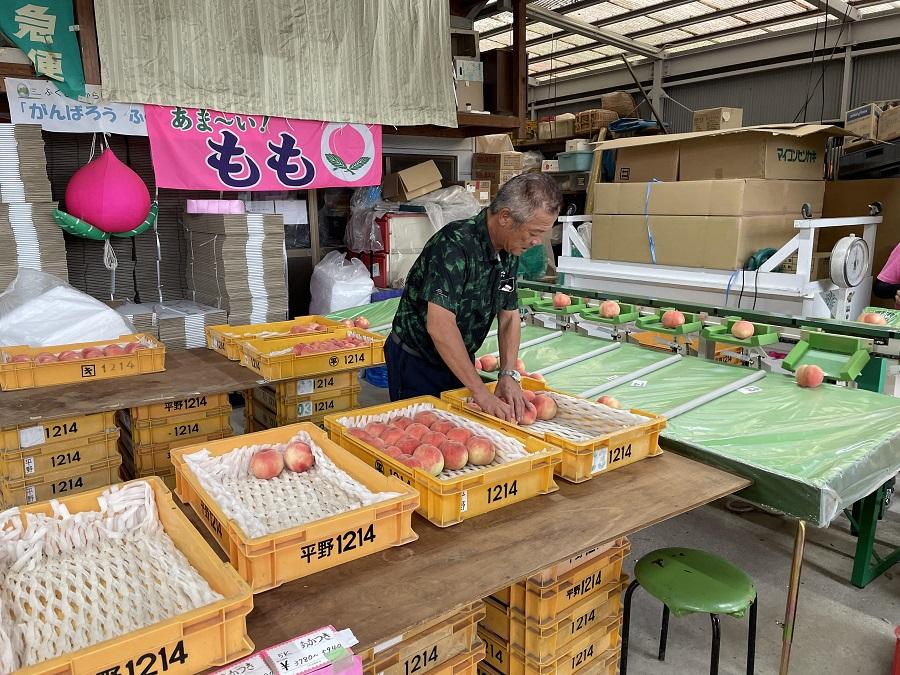 まだまだ続くデリシャスな福島の桃!秋の「ゆうぞら」はもう食べた?